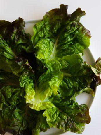 red green lettuce